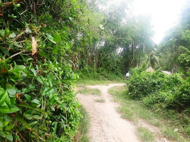 Con đường dẫn về nhà cô dâu ở huyện Phù Mỹ, Bình Định heo hút bóng người