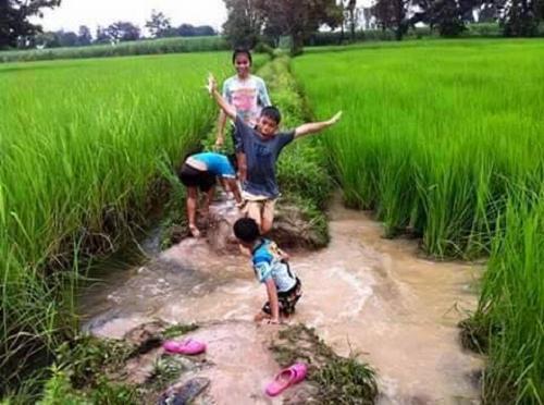 Khung cảnh thanh bình của tuổi thơ giữa những cánh đồng lúa xanh ngát.