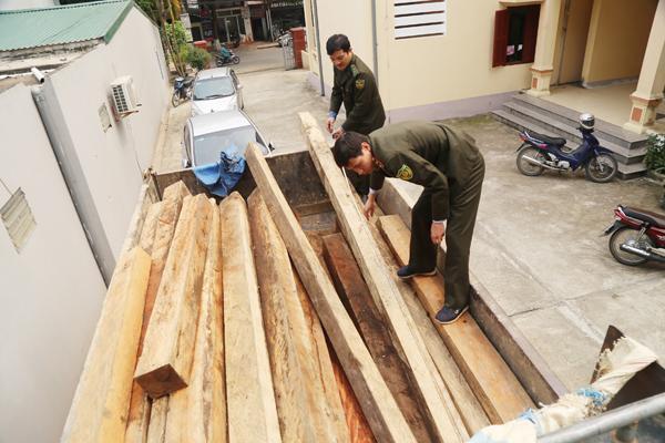 Gỗ khai thác trái phép được lực lượng kiểm lâm huyện Bát Xát thu giữ.