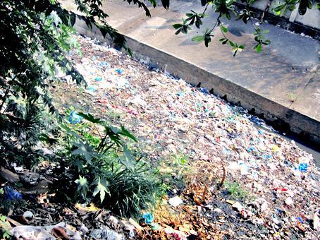 Đoạn cuối của suối Linh, khu vực chảy qua phường An Bình, ngập rác