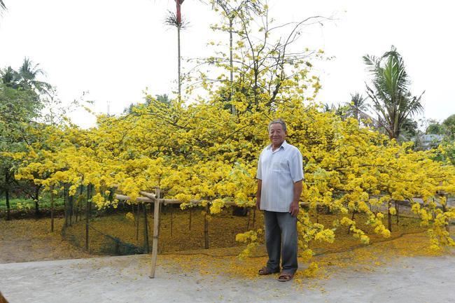 Ông Ba Đối bên cạnh cây mai.