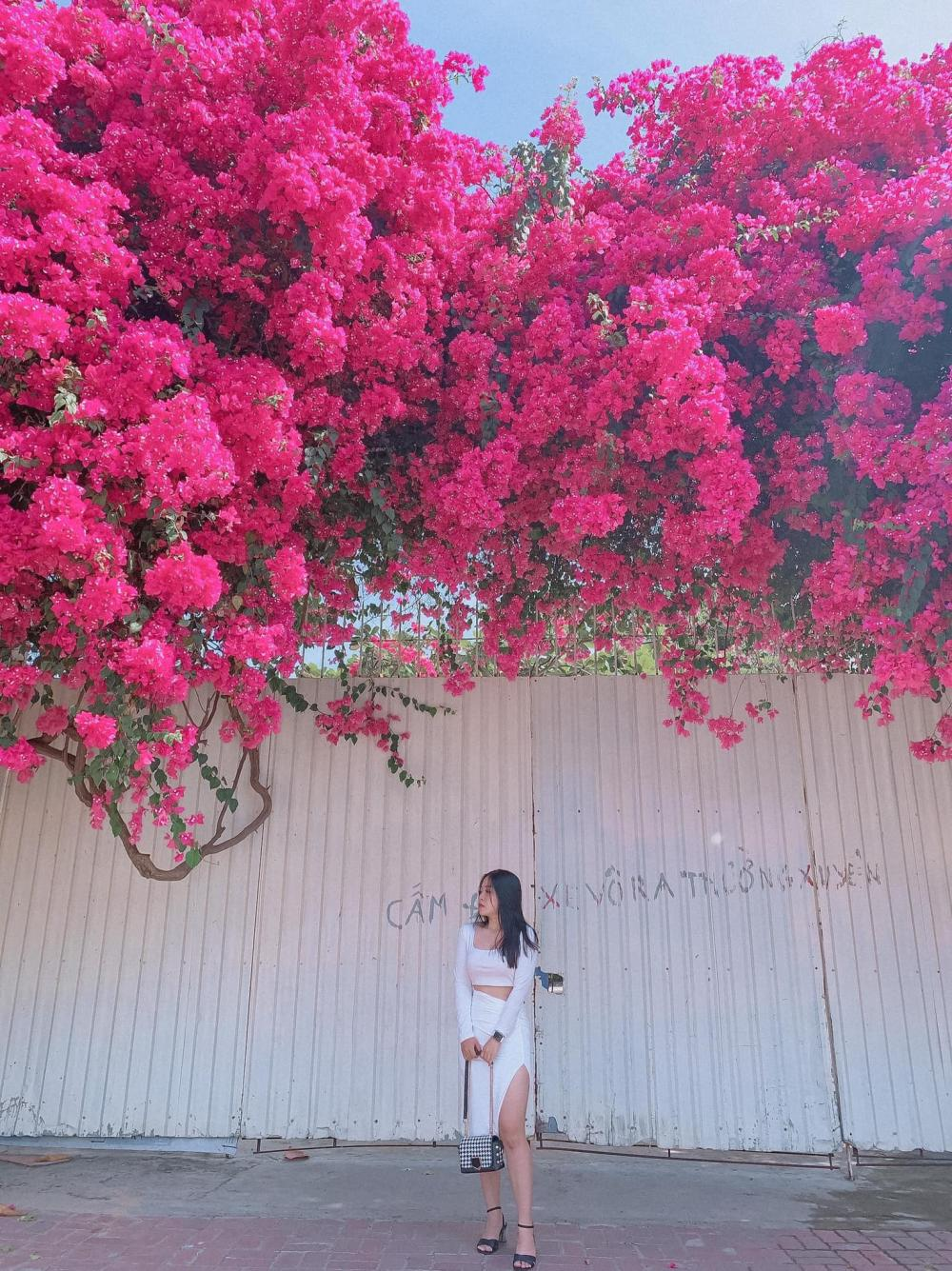 Chỉ sau ít giờ đăng tải, những bức ảnh về giàn hoa giấy Vũng Tàu nhanh chóng được chia sẻ rộng rãi và nhiều người tới đây check-in.