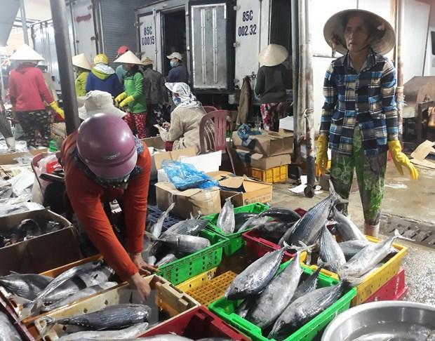 Thương lái thu mua các loại cá biển tại cảng cá Đông Hải, thành phố Phan Rang-Tháp Chàm để đưa tiêu thụ các nơi. (Ảnh: Nguyễn Thành/TTXVN)