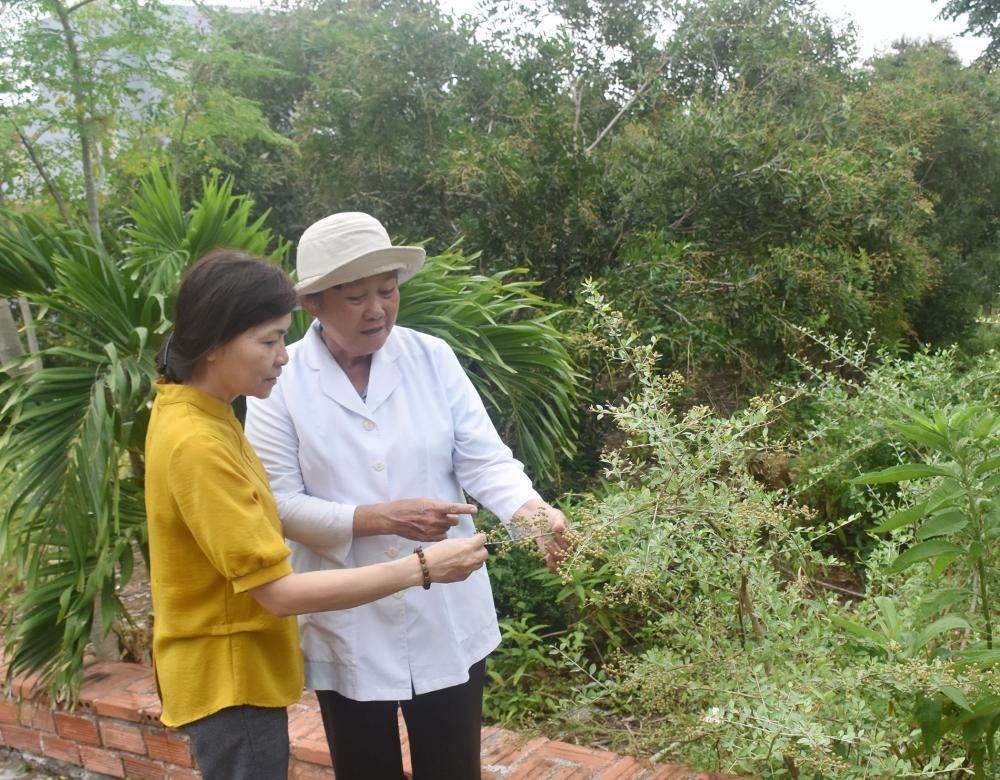 Trong khuôn viên chùa có phòng khám Hưng Thắng Tự chuyên bốc thuốc, chữa trị bệnh miễn phí cho người dân. Trong ảnh: Lương y Lê Thanh Tốt (bên phải) giới thiệu về cây thuốc từ bi.