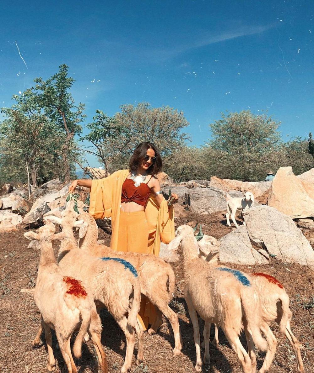 Quanh hồ đập Thanh Sơn là nơi nhiều người tìm đến để chụp ảnh cùng đàn cừu. Ảnh: Queenie.hn, trangtrann.__