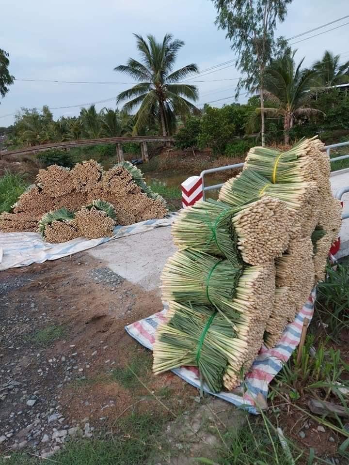 Hàng chục bó sả lớn được xếp ngay ngắn, sẵn sàng lên đường tới tay người dân Sài Gòn.