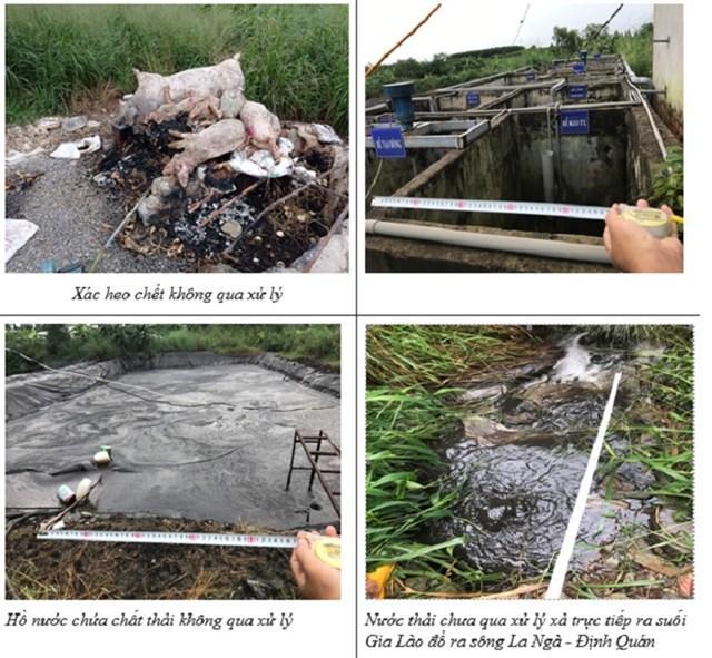 Hình ảnh vi phạm của 2 trại heo được cơ quan Công an huyện Xuân Lộc tổng hợp. Ảnh: Công an Xuân Lộc.