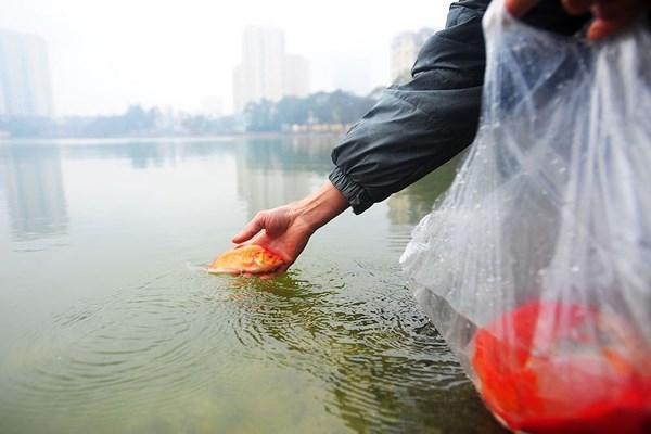 Nên thả cá nhẹ nhàng ở nơi sông hồ sạch sẽ, rộng rãi- ảnh minh họa- nguồn VOV