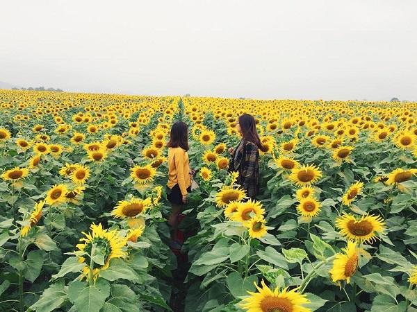 Đây là địa điểm thu hút rất nhiều khách du lịch Nghệ An mỗi năm.