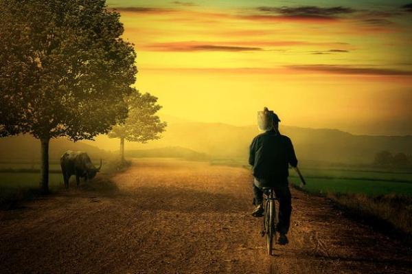 Hay cha đạp xe vác cuốc ra thăm đồng... là những hình ảnh thân quen chẳng thể nào quên.