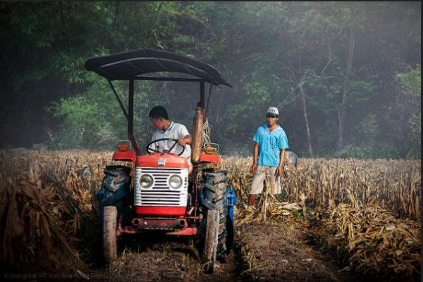 Hoạt động lao động sản xuất thường nhật của những người dân quê.