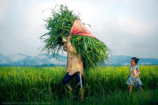 Cánh đồng xanh ngát xanh và thơm thơm mùi lúa mới.