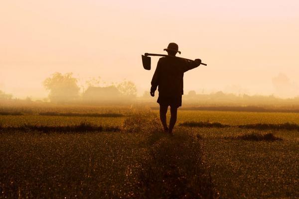 Hình ảnh người cha với đôi vai gầy vác cuốc ra đồng cũng chẳng còn xa lạ đối với chúng ta.