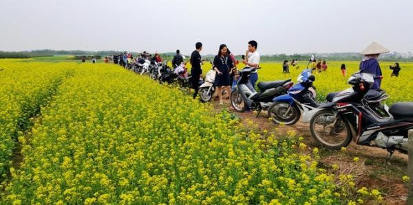 Người dân địa phương và từ nhiều tỉnh, thành khác đổ về xã Hồng Lý để ngắm cánh đồng hoa cải và chụp hình lưu niệm