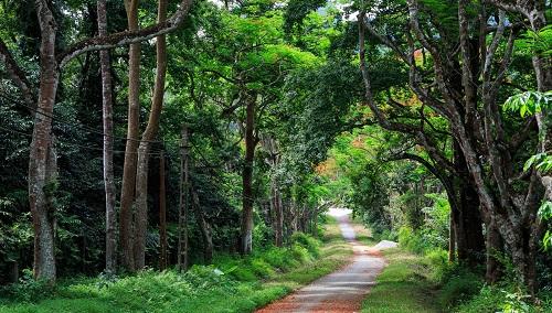 Rừng Cúc Phương là một khu bảo tồn thiên nhiên nổi tiếng ở Việt Nam.
