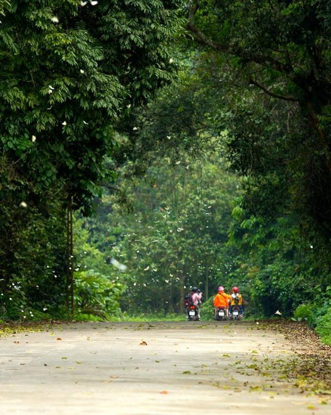 Du khách tranh thủ những ngày nắng đẹp có nhiều bướm để lên rừng quốc gia Cúc Phương hòa mình vào thiên nhiên trong lành tại nơi này