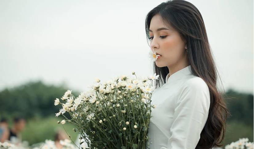 Cúc họa mi trắng là loài hoa được người Hà thành mong đợi nhất trong những ngày đông