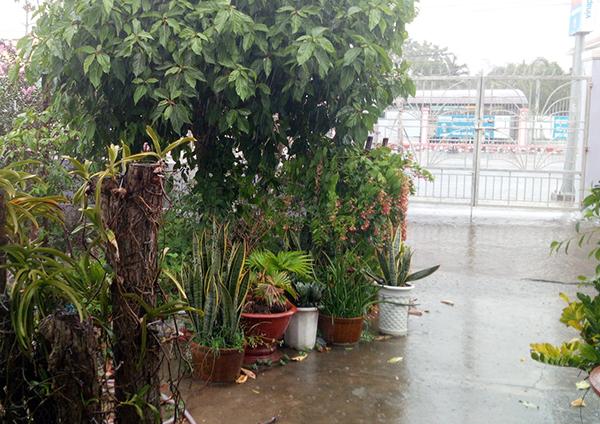 Trận mưa vàng giải nhiệt sau nhiều ngày nắng nóng khiến người dân vui mừng. Cao Xuân Lương