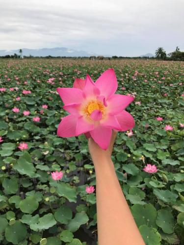 Say đắm với vẻ đẹp thanh khiết của hoa sen. (Nguồn: Ha Trang)
