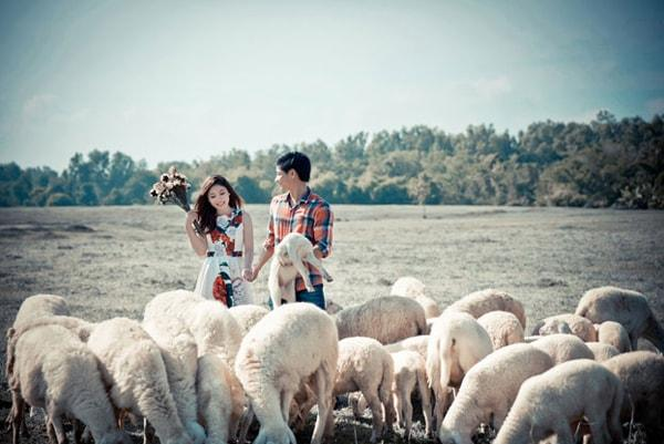 Du khách trải nghiệm với cừu