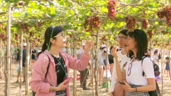 Mô hình du lịch làng nho Thái An thu hút đông đảo du khách tham quan.