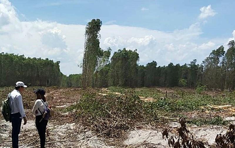 Dự án tại xã Thắng Hải của Alibaba thực chất chỉ là rừng tràm