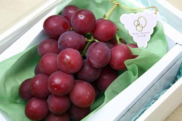 Tháng 8 là thời điểm thu hoạch nho Ruby Roman Nhật Bản. Trọng lượng chùm, số trái mỗi chùm, trọng lượng gốc, biểu đồ màu quả nho được ghi lại và tiếp tục cập nhật theo từng năm. Ảnh: BI.