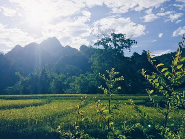 Xuân Sơn là vườn quốc gia duy nhất có rừng nguyên sinh trên núi đá vôi, với hệ sinh thái đa dạng, phong phú với nhiều loại động thực vật quý hiếm