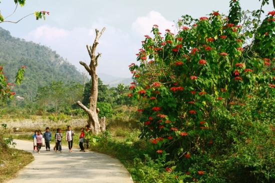 Độ cuối đông, con đường qua bản Cỏi để dẫn vào vườn Quốc gia Xuân Sơn tràn ngập sắc đỏ của hoa trạng nguyên