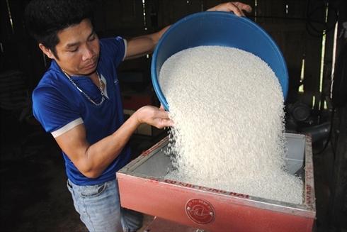 Xay xát gạo nếp Gà Gáy tại xã Mỹ Lung