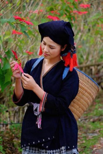 Thiếu nữ bên hoa trạng nguyên- ảnh FB Mai Mẹt