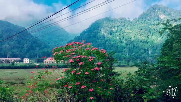 VQG Xuân Sơn, Phú Thọ là một địa điểm để các bạn ngắm hoa trạng nguyên- ảnh FB Mai Mẹt