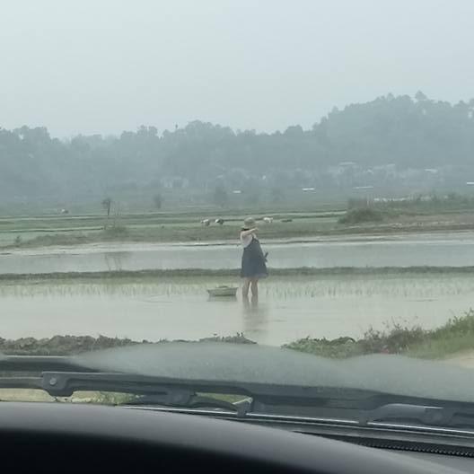 Bầu vượt mặt nhưng người phụ nữ này vẫn phải lội ruộng cấy lúa