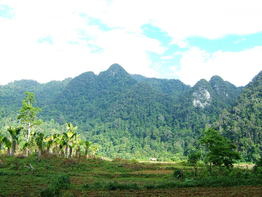 Vườn quốc gia Xuân Sơn. (Ảnh: Sưu tầm)
