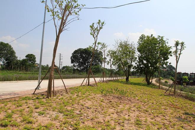 Thảm cây cỏ, hoa mới được trồng cách đây chưa lâu đã bắt đầu xanh tốt.