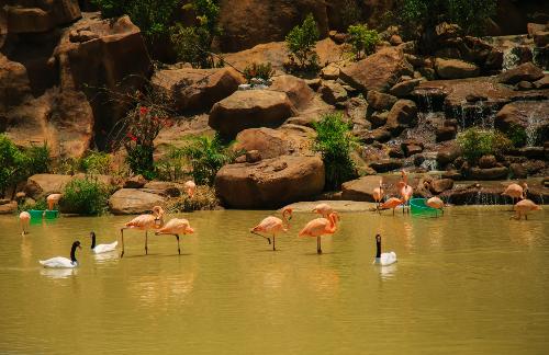 Ngoài ra, bạn đừng quên ghé thăm khu nhà chim để ngắm màn trình diễn trên không trung rực rỡ sắc màu của vẹt mào vàng, chích chòe lửa, vẹt xanh vàng Ma Cau; hay nhún nhẩy theo những chương trình biểu diễn vui nhộn của các