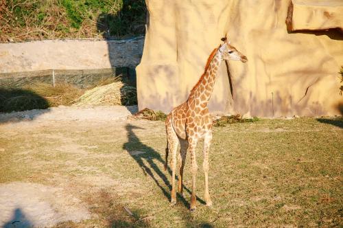 Vườn Quý Vương - vườn thú mở ở Nha Trang: Đây là vườn thú độc đáo khi quy tụ hàng chục loài quý hiếm như vượn Pile, linh cẩu, hà mã, tê giác... Selfie cùng hươu cao cổ, hổ trắng belgal, sau đó đăng các hình ảnh này lên Facebook là một trong những hoạt động thú vị và đáng nhớ.
