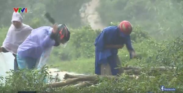 Người dân đang chặt cây bị đổ để phục vụ việc đi lại.