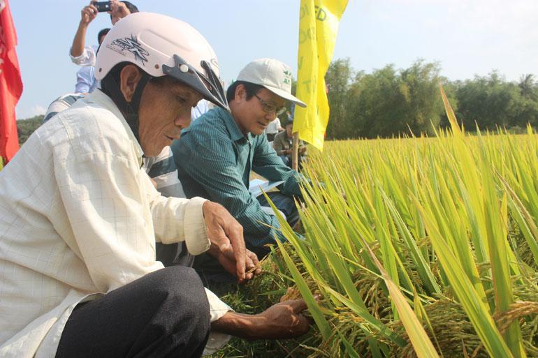Mô hình sản xuất lúa chất lượng cao tại HTX Nông nghiệp An Thạch (huyện Tuy An) mang lại hiệu quả cao, được đông đảo thành viên của HTX tham gia - Ảnh: MINH DUYÊN