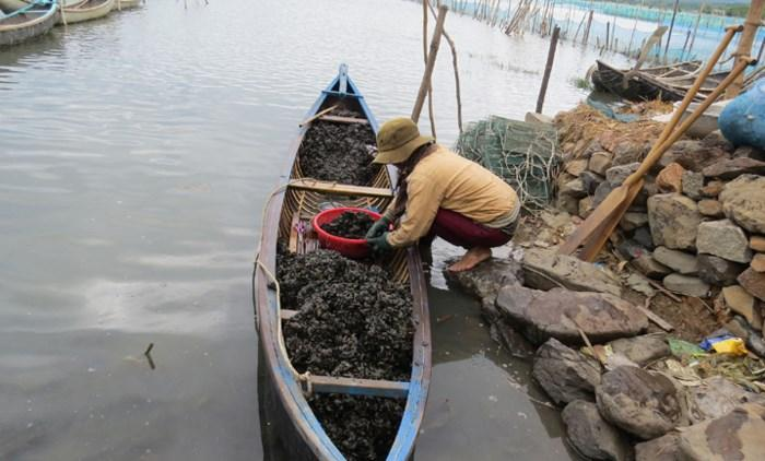 Sinh hoạt thường ngày của người dân vùng đầm Ô Loan.