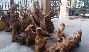 Gỗ hương giáng được bày bán nhiều nơi ở tỉnh Quảng Bình