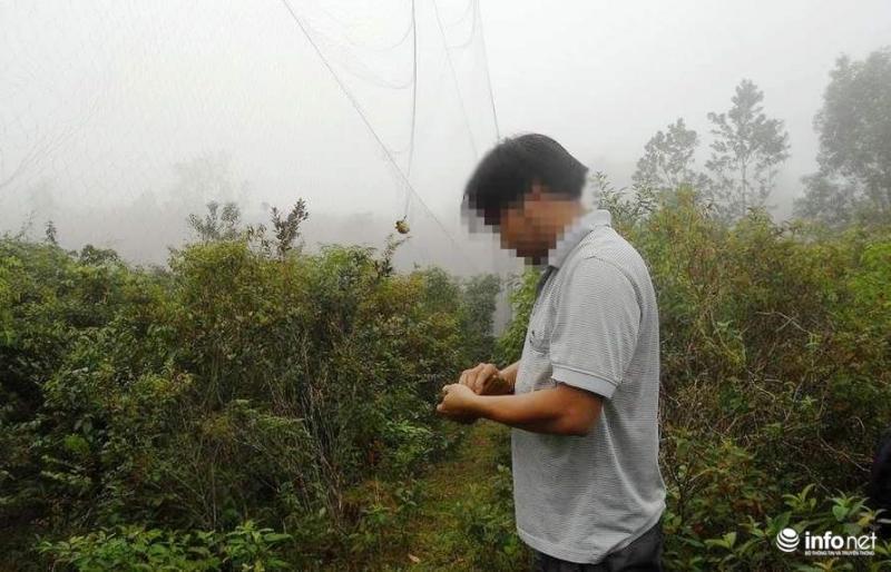 Kim Th. đang gỡ những con chim bị dính lưới.