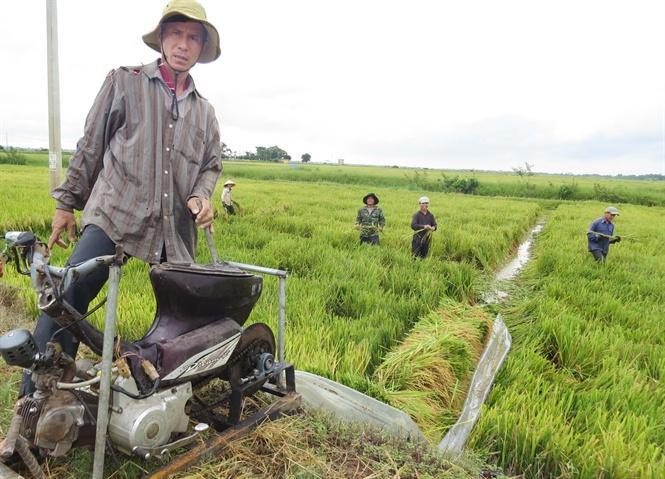 Máy tời lúa giúp nông dân trên đồng ruộng