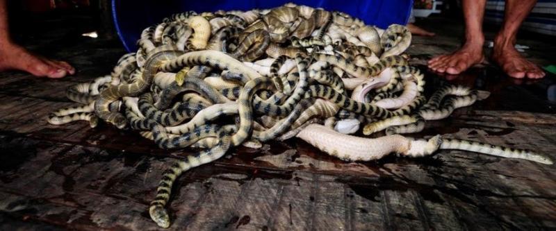 Đẻn biển đặc sản Quảng Bình thực ra là một loài rắn biển có thân nhỏ dài từ 1m - 2m, có vảy. Đẻn biển gồm rất nhiều loại như: đẻn kim, đẻn cá, đẻn sọc, đẻn bông, đẻn gai. (Nguồn Blogspot)