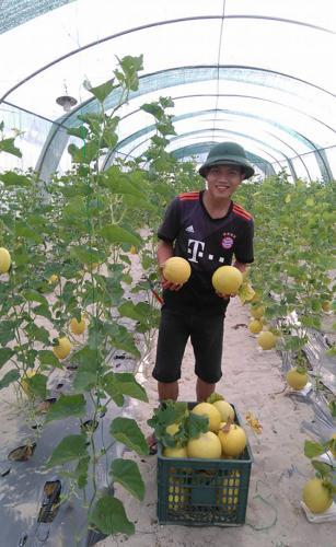 Sản phẩm dưa lưới của Hợp tác xã nông nghiệp công nghệ cao Kiến Giang (Thanh Thủy, Lệ Thủy) có thị trường tiêu thụ lớn, được người tiêu dùng ưa thích.