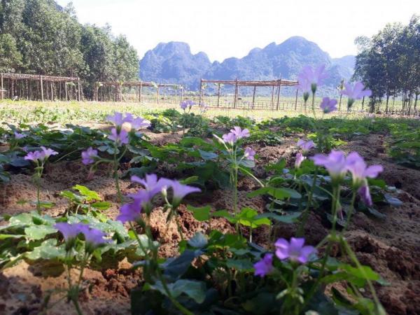 Những bông hoa đồng nội mộc mạc, dân dã tạo nên vẻ rực rỡ cho khu vườn. (Nguồn: danviet.vn)