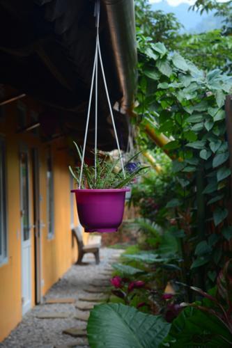 Lối vào các phòng của homestay tĩnh lặng và xanh mát. (Nguồn: Việt Nga)