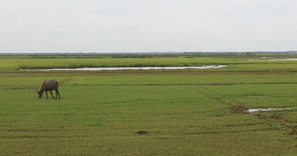 Vùng đất phía trước đình làng Vạn Ninh nơi một thời bà Kỷ đánh hổ cứu bạn.