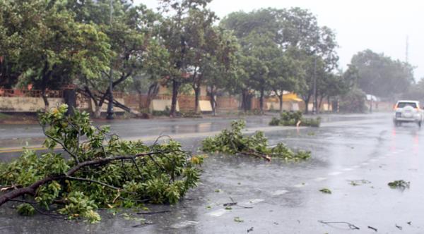 Hệ thống cây xanh gãy đổ và bật gốc dọc quốc lộ 1A qua địa bàn thành phố.
