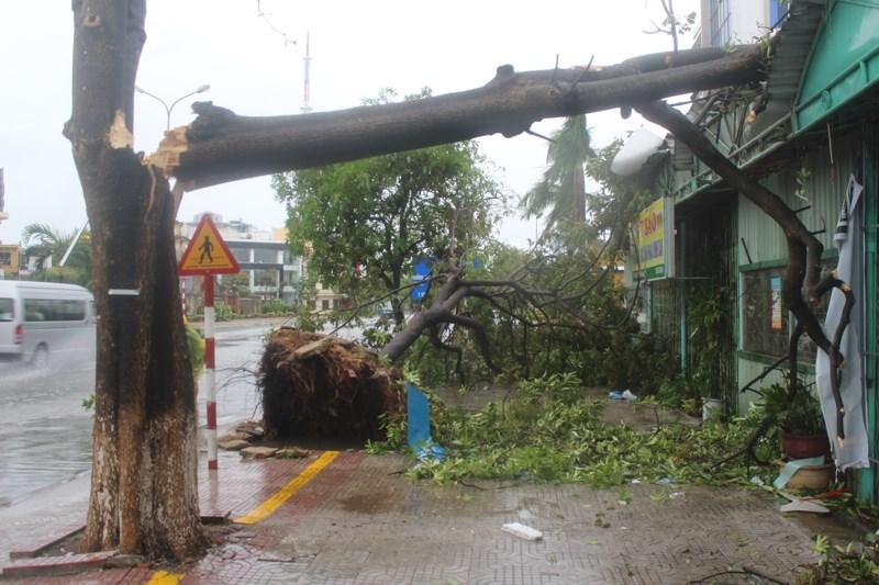 Đến chiều nay 15/9, đường phố của thành phố Đồng Hới hoang tan hoang với nhiều nhà tốc mái, cây cối đổ gãy. Nhiều nơi cành cây gãy còn treo lơ lửng trên cây, gây nguy hiểm cho người đi đường. Ảnh: Nguyễn Do
